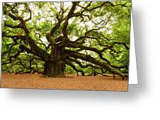 Angel Oak Tree 2009 Greeting Card