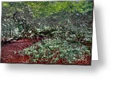 Angel Oak Tree 3 Greeting Card