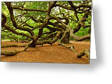 Angel Oak Tree Branches Greeting Card by Louis Dallara