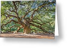 Angel Oak Tree In Charleston Sc Greeting Card
