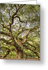 Angel Oak Tree Johns Island Sc Greeting Card by Dustin K Ryan