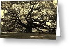 Angel Oak Tree Sepia Greeting Card