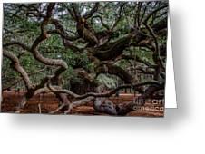 Angel Oak Tree Treasure Greeting Card