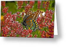 Angel Of The Wildflowers Greeting Card