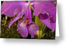Angel Orchid Gold Leaf Greeting Card