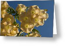 Angel Trumpets In The Sky Greeting Card