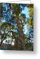 Angeles Sun -beautiful Tree With Sunburst In Angeles National Forest In The San Gabriel Mountails Greeting Card
