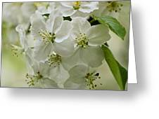 Angelic Blossom Greeting Card
