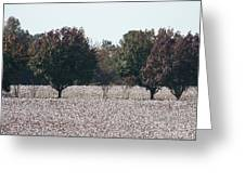 Angelic Cotton Fields Greeting Card