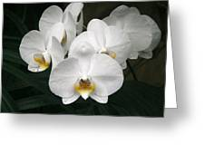 Angelic Delight Greeting Card