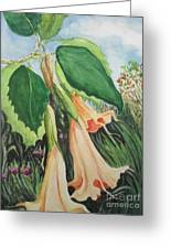 Angel's Trumpet Exotica Greeting Card
