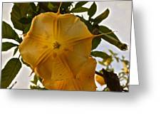 Angel's Trumpets Greeting Card