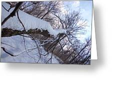 Angled Fallen Tree Greeting Card