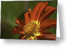 Angled To The Sun Greeting Card