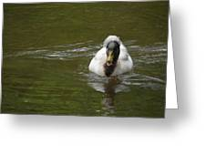Angry Crested Duck Greeting Card