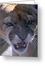 Angry Florida Panther Greeting Card