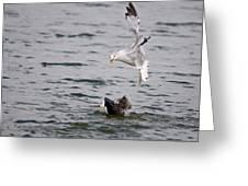 Angry Gull Greeting Card