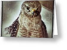 Angry Hawk Greeting Card