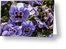 Angry Pansy Greeting Card