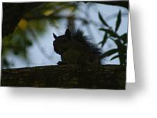 Angry Squirrel Greeting Card