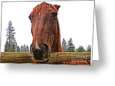 Angry Stallion Greeting Card