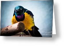 Angry Sunbird Greeting Card