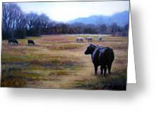 Angus Steer In Franklin Tn Greeting Card by Janet King