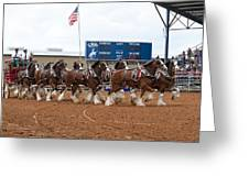 Anheuser Busch Clydesdales Pulling A Beer Wagon Usa Rodeo Greeting Card