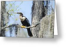 Anhinga And Spanish Moss Greeting Card