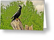 Anhinga Bird On Stump Greeting Card