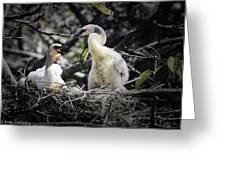 Anhinga Chicks Greeting Card