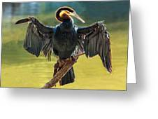 Anhinga Drying His Wings Greeting Card