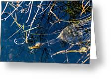 Anhinga Everglades Greeting Card