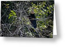 Anhinga In Brush Greeting Card