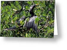 Anhinga Male Greeting Card