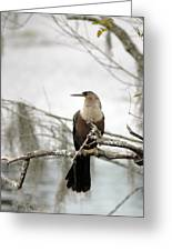 Anhinga On A Misty Morning Greeting Card