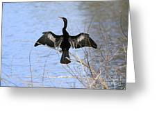 Anhinga Over Blue Water Greeting Card