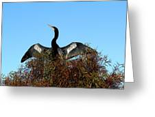 Anhinga Pride Greeting Card by April Wietrecki Green