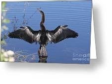 Anhinga  Sunbathing Greeting Card