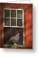 Animal - Bird - Chicken In A Window Greeting Card