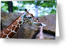 Animal - Giraffe - Sticking Out The Tounge Greeting Card