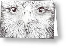 Animal Kingdom Series - Bird Of Prey Greeting Card