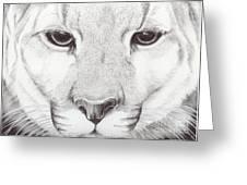 Animal Kingdom Series - Mountain Lion Greeting Card