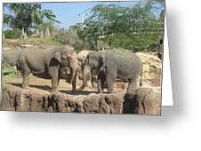 Animal Park - Busch Gardens Tampa - 01131 Greeting Card