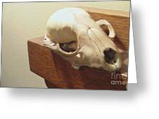 Animal Skull Mantel 1 12 2011 Greeting Card