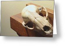 Animal Skull Mantel 2 12 2011 Greeting Card