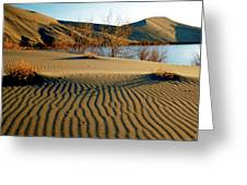 Animal Tracks In The Sand Greeting Card