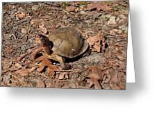 Animals 160 Greeting Card
