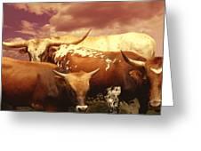 animals - cows- Longhorns La Familia  Greeting Card by Ann Powell