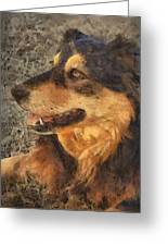 animals - dogs - Faithful Friend Greeting Card